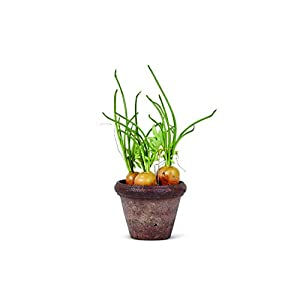 K&K Interiors B5787 11 Inch Potted Carrots, Cotton