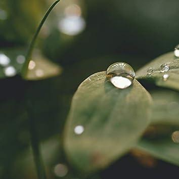 The Beauty In Rain | Natural Rain Recordings