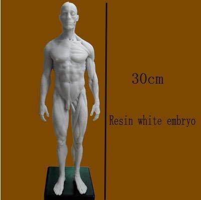 DAJIADS Figur Figuren Statue Statue Statuen Skulpturen Buddha Menschliches Skelett Anatomische Malerei Modell Anatomischen Anatomie Skull Skulptur Kopf Körper Muskel Artist Zeichnung Stat