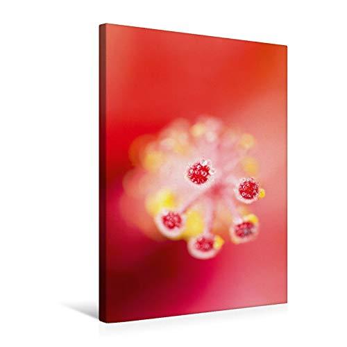 Lienzo premium de 50 cm x 75 cm de alto, diseño de gotas de agua en una hoja de hibisco graciosa, imagen sobre bastidor, imagen lista en una hoja de hibisco (CALVENDO Natural), CALVENDO natural