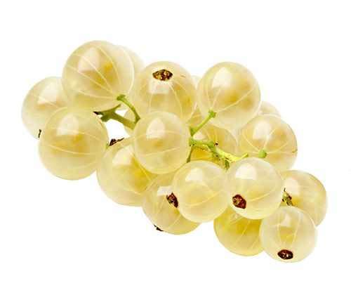 Weiße Johannisbeere Ribes rub. 'Witte Hollander' C2-2 Liter 65 cm