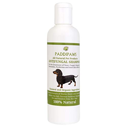 100% Natural Antifungal and Antibacterial Dog Shampoo - Yeast Infections, Ringworm, Dermatitis, Pyoderma - Safe - Natural - Paraben and SLS Free - 250ml - Larger bottle available from the store.