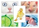 50 cartoline agrodolci immagini multipack di grande valore ispirate alla natura...