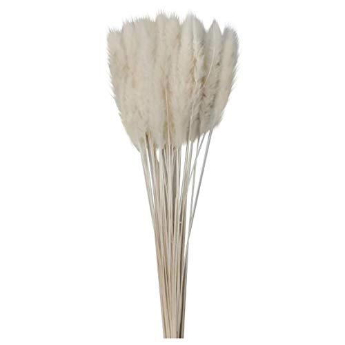 15 Stück natürliche Reed Weizen Ohren Setaria getrocknete Blumen getrocknete Pampa Gras Stängel Fuchsschwanz Kaninchen Schwanz Gras Pflanzen für Hochzeitsstrauß Blumenarrangements Kranz Wohnkultur