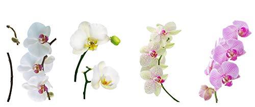 8 x Fenstersticker Orchidee, Orchideen, Blume, Fensterbilder, Windowsticker, Fensterdeko, Fenster Tattoo, Fliesensticker, Fliesenaufkleber, Fensterfolie, mehrmals wiederverwendbar