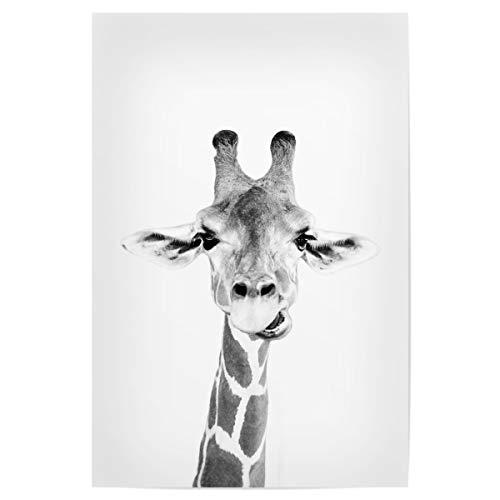 artboxONE Poster 30x20 cm Tiere Giraffen Portrait - Bild Black and White Giraffe Portrait