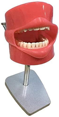 XIEZIModelo Anatómico Sistema De Simulador Dental Cabeza Fantasma Dental Educación Modelo De Enseñanza Modelo De Dientes Estomatología Dental Preparar La Cabeza De Entrenamiento De Los Dien