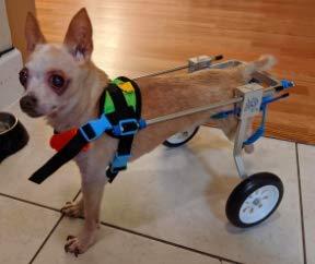 New Adjustable Dog Wheelchair (New-XXS), Hip Height: 6.3'-9.5', Width: 3.5'-6', Weight 2.2 to 11...