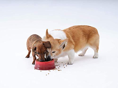 ソルビダグレインフリーチキン室内飼育成犬用(1.8kg)