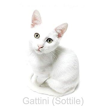 Gattini (Sottile)