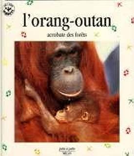 L'orang-outan, acrobate des forêts