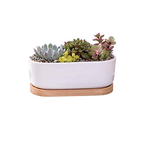 CHHD Plant Planter Modern Ceramic Planters Porcelain Flower Planter Plants Containers with Drainage Hole with Tray Ceramic Plant Planter Home Office Christmas New Year Decoration