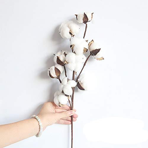 Cestbon 3 Stück Getrocknete Baumwollblumen Natürliche Baumwoll-Stiele Kapok Getrocknete Blumen Baumwolle Kugelkranz Stiel Äste Deko Blume Für Bauernhaus Stil Hochzeit Party Zuhause,Weiß