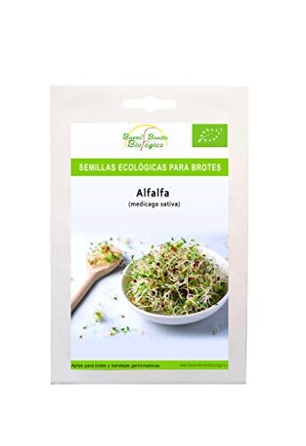 Semillas ecológicas para brotes Alfalfa de Bueno Bonito Biológico. Semillas para germinar brotes de Alfalfa ecológicos