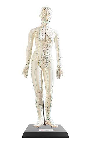 newgen medicals Akupunktur-Modell Frau