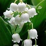 100 PC Lirio de los valles semillas de flores, semillas de orquídeas campana, rico aroma, semillas de flores bonsai, tan lindo y hermoso