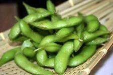 Semillas de judías, Edamame, soja comestible, 25 orgánico no GMO sin tratar Seed