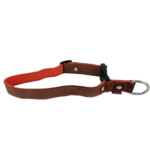 Venetto Halsband Leder und Filz für kleine und große Hunderassen, Made in Germany (2cm, Orange)
