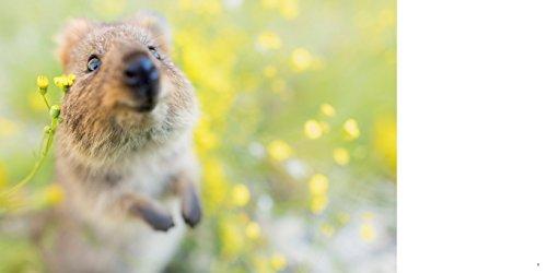 眺めてときめく癒しのひととき。ちょっと変わった「動物たちの写真集」