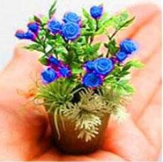 Nouveaux produits 100pcs 4 variétés de roses Mélange de graines rares Bonsai Mini arc-en-Graines de fleurs belle plante pour le bricolage jardin Noir