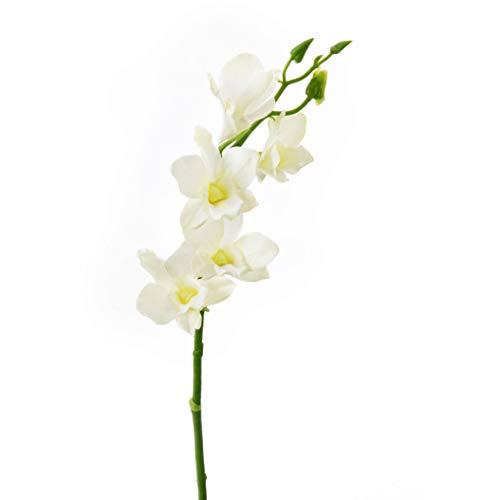artplants.de Ramo d'orchidea Dendrobium Artificiale Anouk, 5 Fiori, Crema, 40cm - Orchidea Decorativa/Rametto d'orchidea