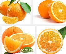 Promotion Rillettes Edible fruits Graines mini-Bonsai orange Graines Chine Escalade Graines Oranger 100% frais 20 PCS / bag Novel Seed