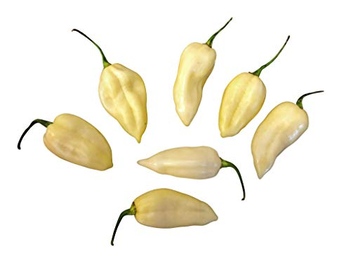10 x Rare neige blanche chili Fatalii Pepper Poivre Graines, De Samenchilishop*