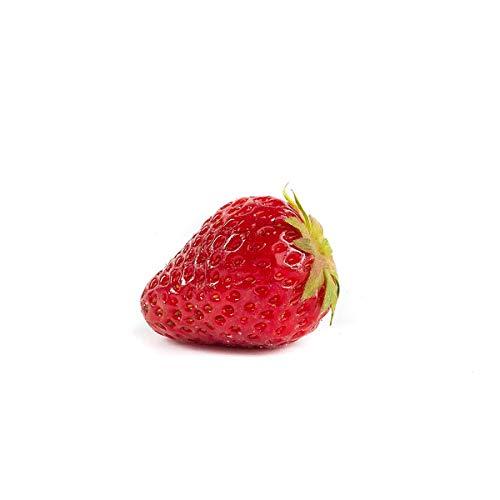 20 Ostara Erdbeerpflanzen - Frigo Pflanzen - Immertragend - Pflanzzeit: März/April - Ernte: Juli bis Oktober - Erdbeersetzlinge/Erdbeerstecklinge - Erdbeeren von Erdbeerprofi.de