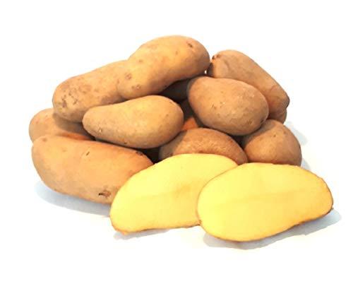Kartoffeln Ditta festkochend aus Deutschland Bayern Speisekartoffeln (10)