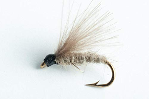Blue Wing Olive CDC Caddis Dry Fly, 6 Pack (#14)