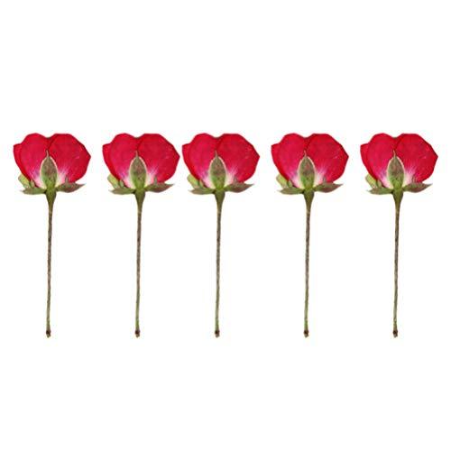EXCEART 12 Piezas Prensadas Flores Reales DIY Hecho a Mano Secas Rosas Chinas Cogen Foto Marco Manicura Artesanía Flor Planta Espécimen para Niños Adultos