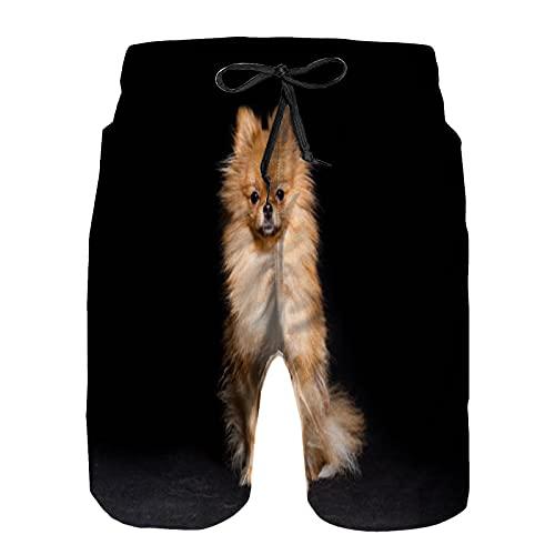 YZBEDSET Bañador De para Hombre Pantalones Playa Shorts, Perro Miniatura de Raza de Perro Pomerania Sentado Aislado en Negro Secado Rápido Ligero Baño Cortos 3XL