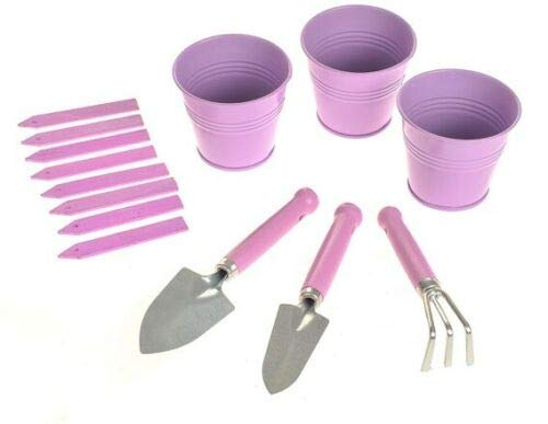 Rammento Home Kit de plantation d'herbes 3 pots miniatures Lilas