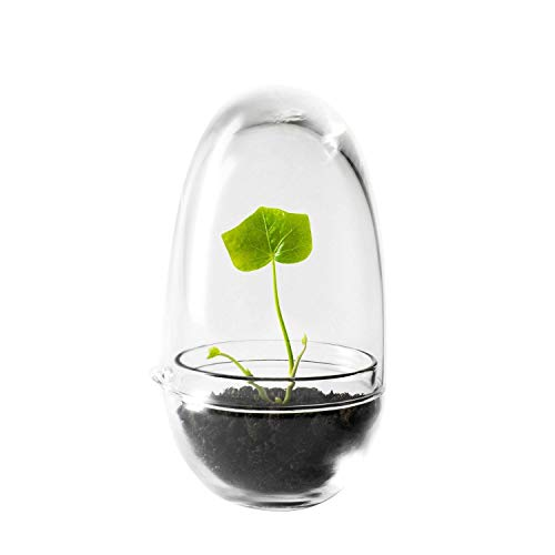 Design terrarium (klein model)