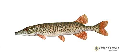 Finest Folia 10cm Hecht Aufkleber Sticker Angeln Angelsport Fisch Hochseeangeln Angler (R050)