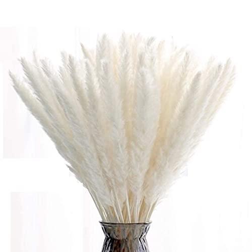 15 unidades de hierba seca de Pampas natural, ramo de flores secas, 55 cm, para salón, dormitorio, boda, balcón, baño, decoración de mesa, etc. (color blanco)