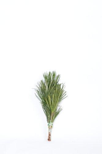 高野槇 コウヤマキ 仏花の花台 40cm 高野山の霊木 仏壇用 お供え