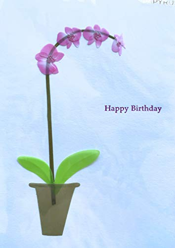 PAPYRUS Card Everyday, birthday Card, 1 Each,