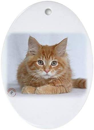 Christmas Tree Ornament Cheap super special price Ranking TOP2 Maine Coon Kitten 9y226d-373a