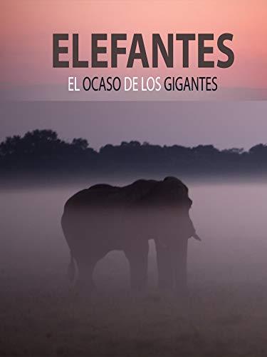 Elefantes, el ocaso de los gigantes