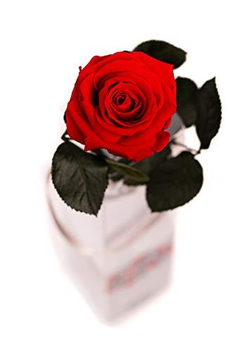 Rosen-Te-Amo – Konservierte echte rote Rose: Unvergängliche Blume mit Grußkarte zum Herunterladen; Infinity Rosen - Deko und Geschenk in neue verstärkte Verpackung - 2