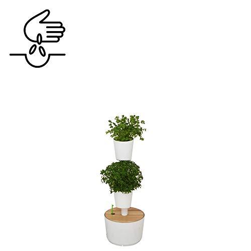 Citysens- Potager d'intérieur avec arrosage auto et graines de plantes aromatiques, blanc, 4 pots