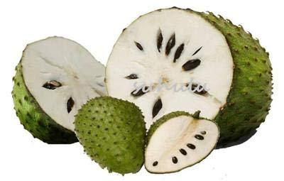10 piezas de fruta de la guanábana, (), Multi-color de sweetsop semillas delicioso semillas de frutas de azúcar en el bonsái