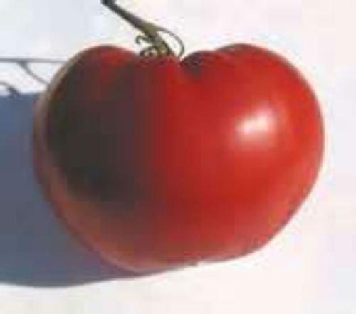 20 graines de coeur australien Tomate Heirloom!