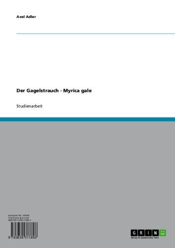 Der Gagelstrauch - Myrica gale