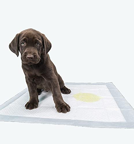 RESTAR Empapadores de Entrenamiento para Perros Gatos Perfumes con Feromonas para Atraer los Cachorros y Simplificar el Entrenamiento Producto Mascotas (56x56CM, 80PSC)