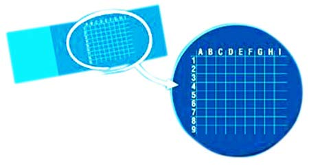 RPI Microscope Grid Slides, 1 x 3 inches, White Imprint, 81 Squares per Slide, 72 Slides per Package, Stain Resistant