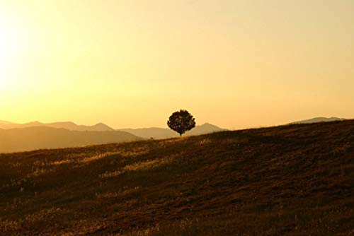 ING Wall Art Print on Canvas(32x21 inches)- Tree Solitary Landscape Umbria Setting Sun Sunset