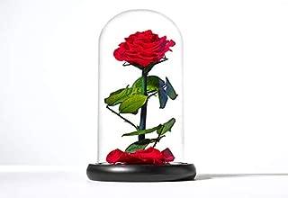 Best everlasting roses in glass Reviews