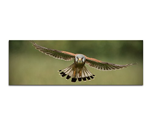 Preisvergleich Produktbild Paul Sinus Art Panoramabild auf Leinwand und Keilrahmen 150x50cm Falke Vogel Flug Holzpfahl